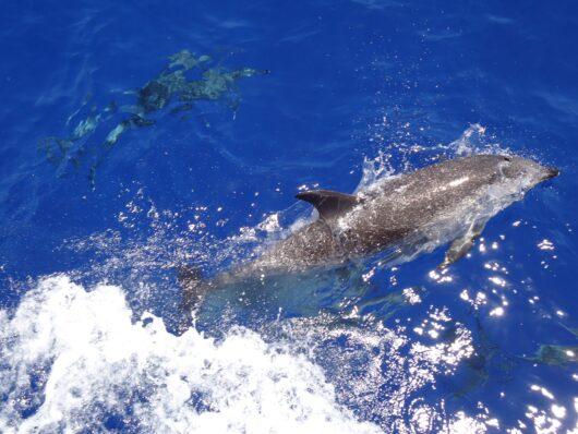 Dolfijnen mariene reservaat