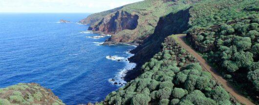 Kustvegetatie La Palma