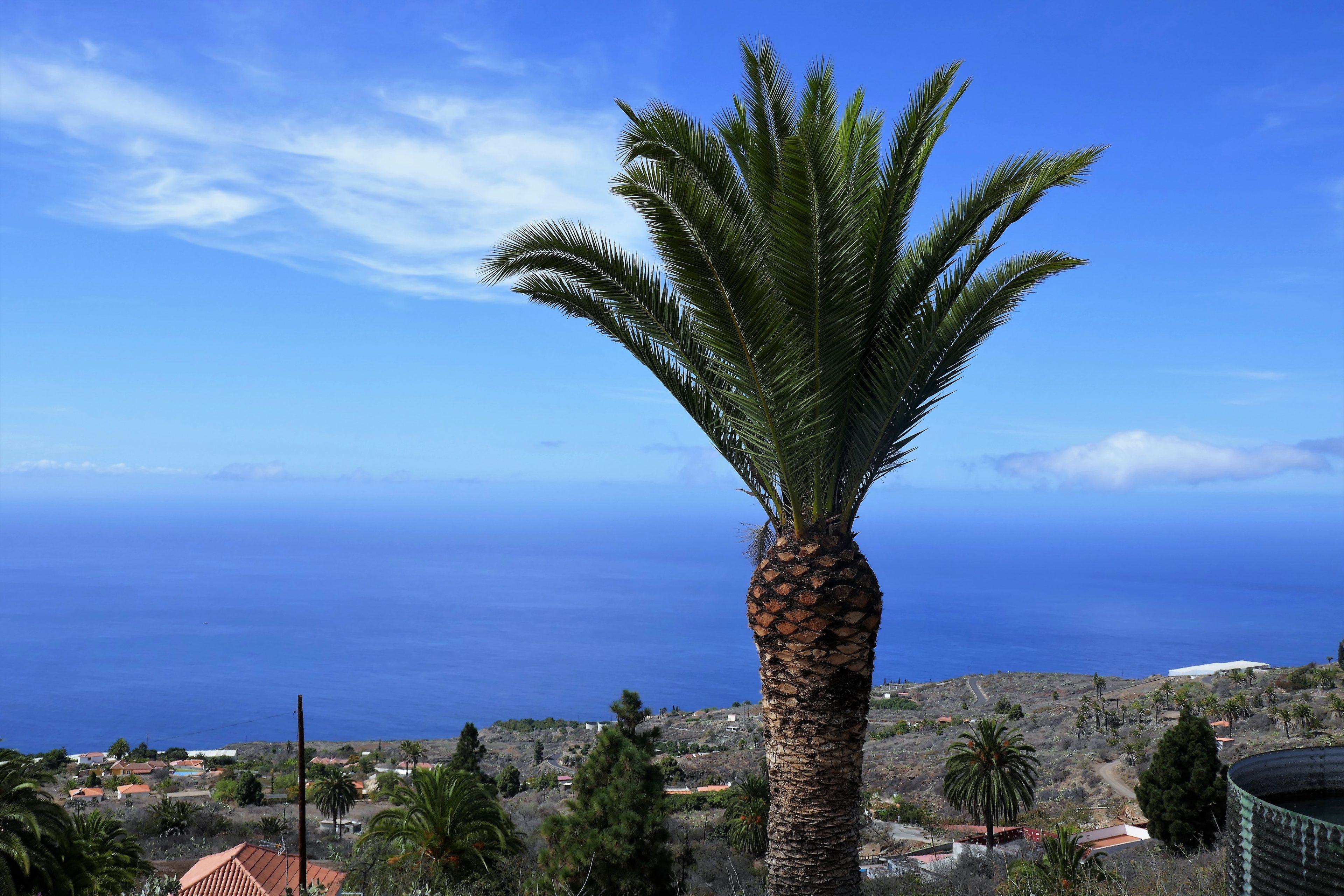 Palm voor de villa.