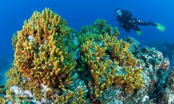 Onderwaterwereld van La Palma.