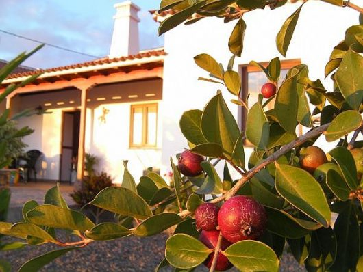 Tuin met fruitbomen
