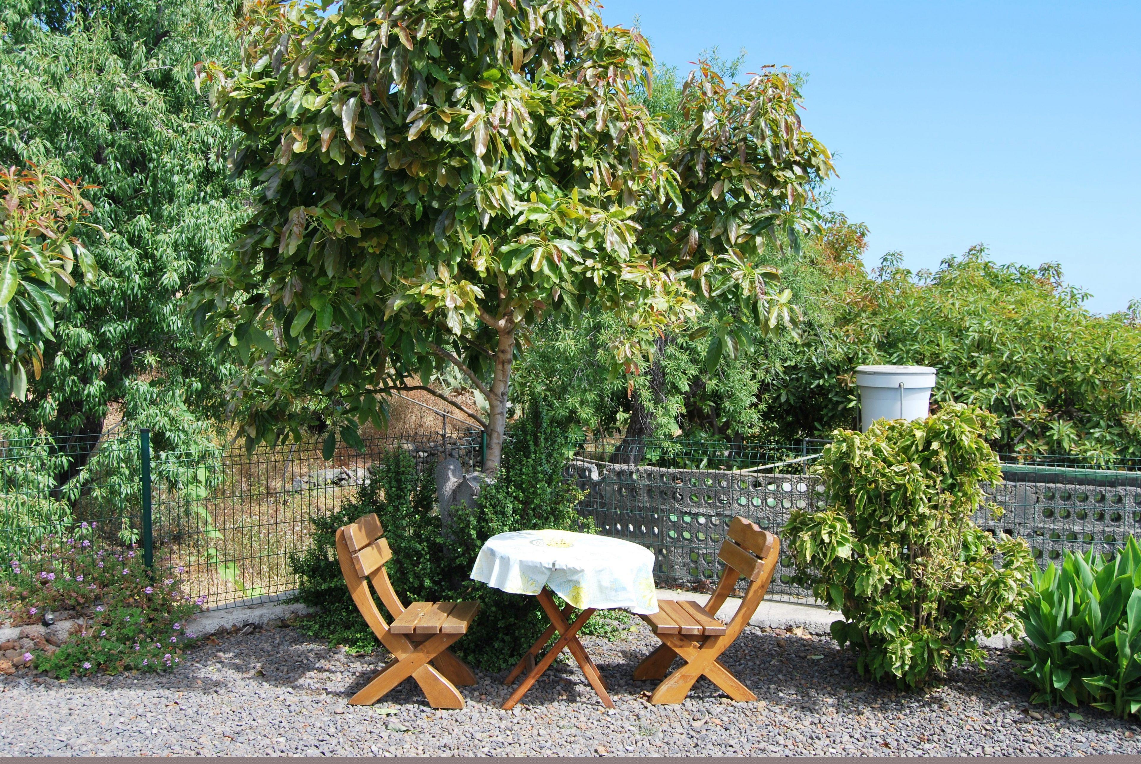 Grote tuin met fruitbomen.
